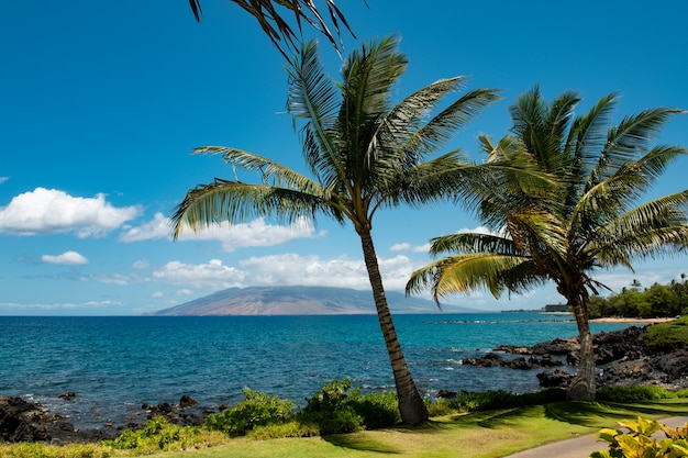 Hawaje plaża hawajski ocean aloha wyspa maui tropikalna plaża panorama