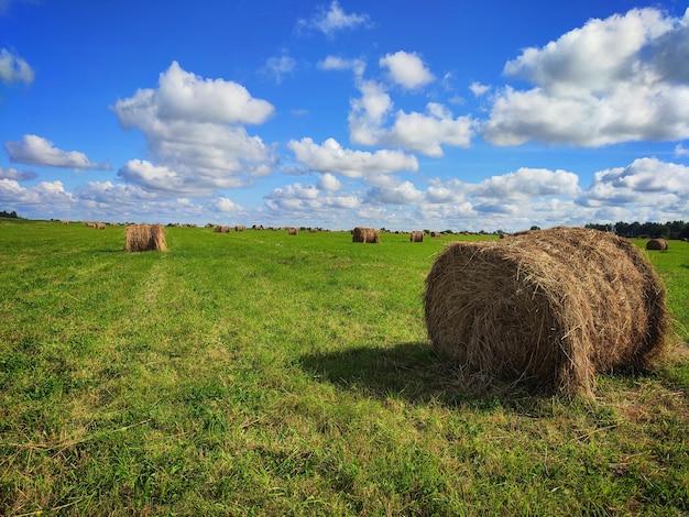 Haystack zbiorów wiosny krajobraz pola