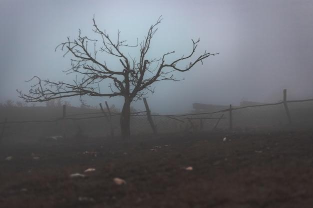 Heban bez liści we mgle
