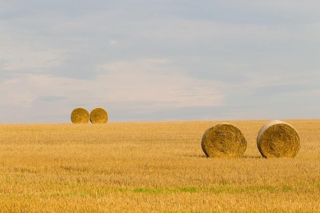 Hej toczy się w dolinie na wsi