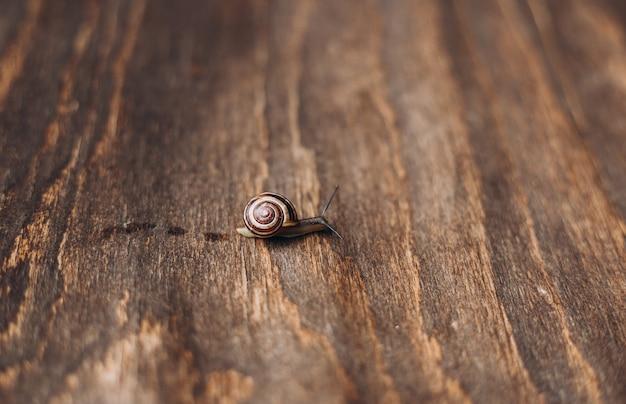 Helix pomatia na tle drewnianych, ogród mały ślimak życia zwierząt w przyrodzie. selektywne skupienie.