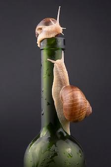 Helix pomatia. ślimak winogronowy na butelce na ciemnej powierzchni. mięczaki i bezkręgowce. wykwintne białko mięsne.