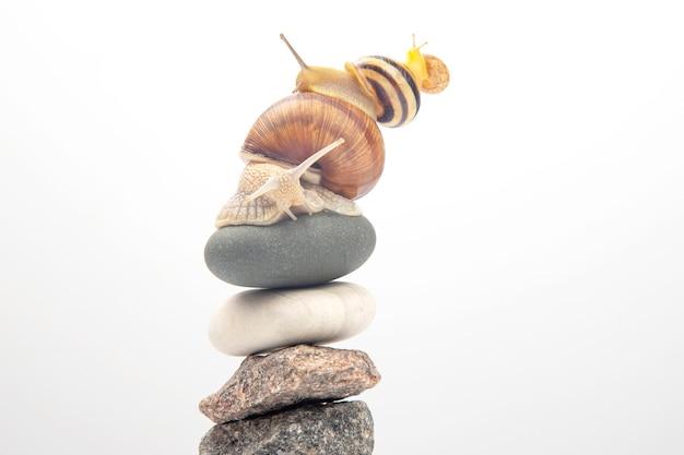 Helix pomatia. ślimaki jeden na drugim balansują na szczycie kamiennej piramidy. mięczaki i bezkręgowce. delikatne mięso i wykwintne potrawy