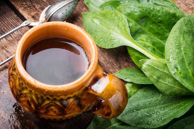 Herbata z babką lancetowatą
