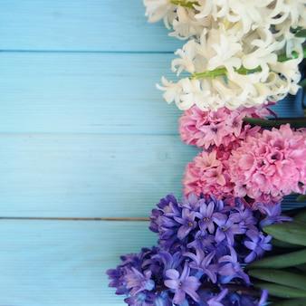 Hiacynty świeżych kwiatów. koncepcja wiosny.