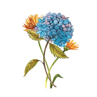 Hidrungea akwarela. dziki kwiat ustawia odosobnionego na bielu. botaniczna akwarela ilustracja, bukiet hidrungea, rustykalne kwiaty.