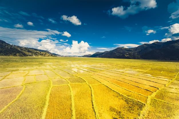 Himalajski ryżu pole, nepal