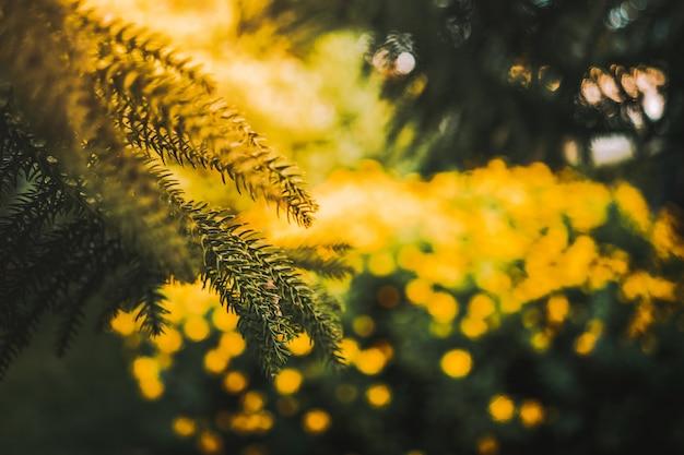 Hipnotyzująca sceneria lasu pełnego roślin kwiatowych euryops pectinatus