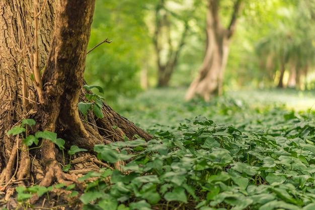 Hipnotyzujące ujęcie roślinności na leśnej ziemi pokrywającej ją jak dywan