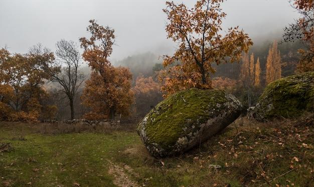 Hipnotyzujący widok drzew na polu w mglisty dzień