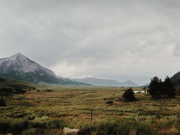 Hipnotyzujący widok na góry i drzewa na polu w pochmurny dzień