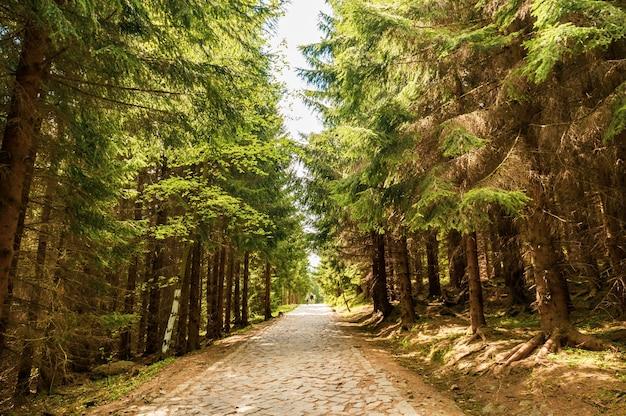 Hipnotyzujący widok na ścieżkę otoczoną drzewami w parku w słoneczny dzień