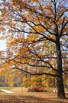 Hipnotyzujący widok na wysokie drzewo z żółtymi liśćmi w parku