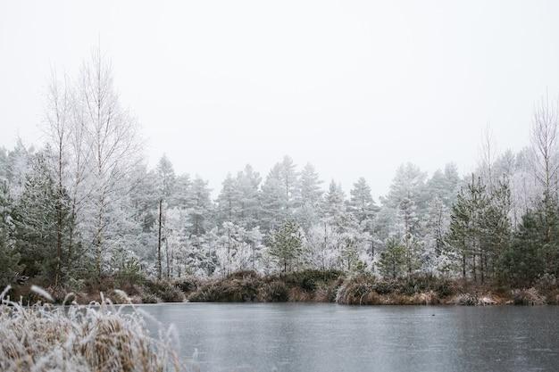 Hipnotyzujący widok na zimowy las z sosnami pokrytymi szronem w mglisty dzień w norwegii