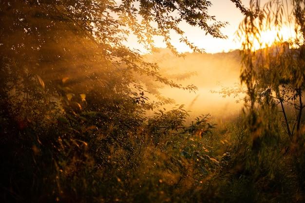 Hipnotyzujący widok na złote słońce przebijające się przez piękne wierzby w lesie
