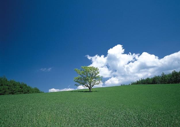 Hipnotyzujący widok samotnego drzewa na zielonych polach pod błękitnym niebem