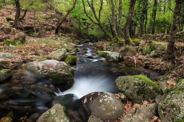 Hipnotyzujący widok strumienia płynącego po omszałych skałach w lesie