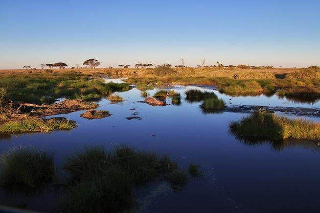 Hipopotam, hipopotam na safari w kenii i tanzanii w afryce