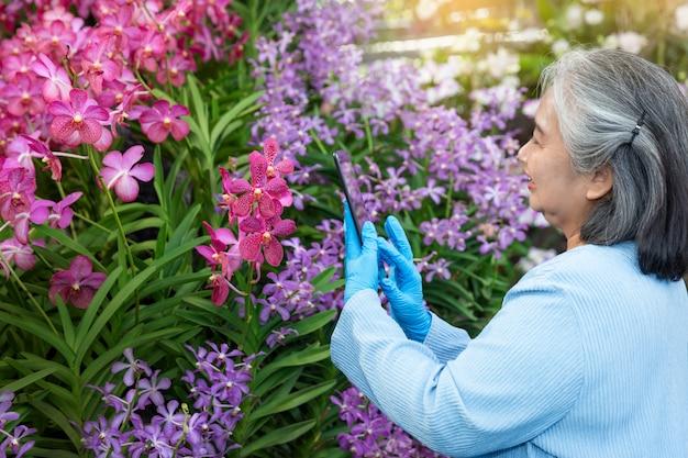 Hobby dojrzałej kobiety używa cyfrową pastylkę podczas gdy sprawdzający przyrosta storczykowych kwiaty i pracujący w szklarni.