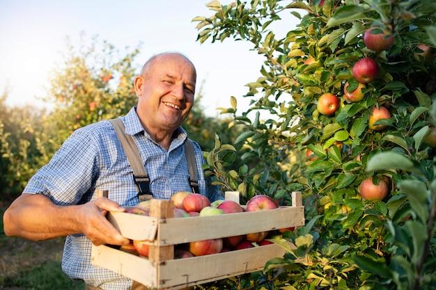 Hodowca jabłek w sadzie owocowym
