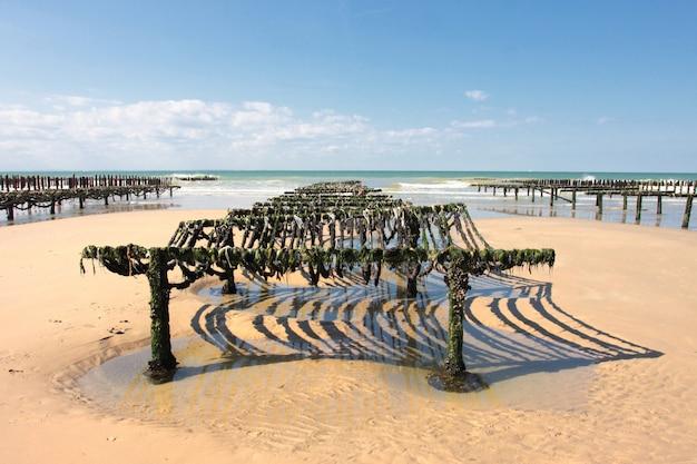 Hodowla małży na wybrzeżu opalu na północy francji