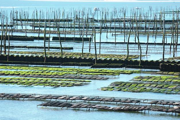 Hodowla ostryg w zatoce arcachon we francji