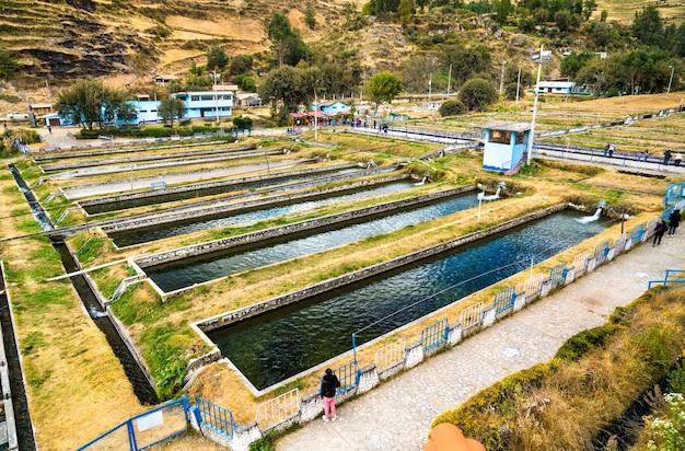 Hodowla pstrągów w ingenio w junin peru