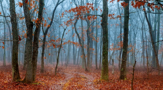 Horror scena ciemny las z blach drzewami i błękitną mgłą