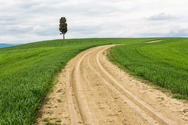 Horyzontalny strzał odosobniony drzewo w zielonym polu z drogą przemian pod chmurnym niebem