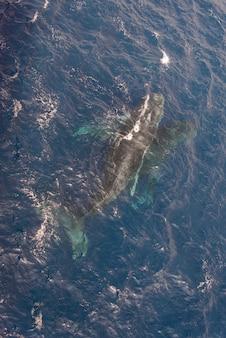 Humbak pływanie w głębokiej wodzie morskiej - widok z lotu ptaka