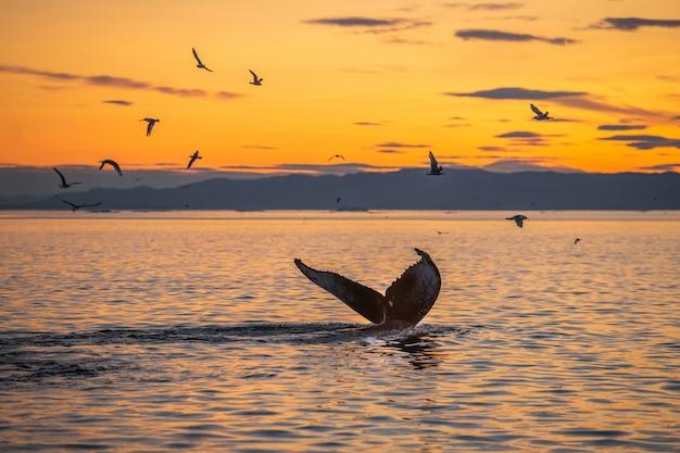 Humbaki w pięknym krajobrazie zachodu słońca