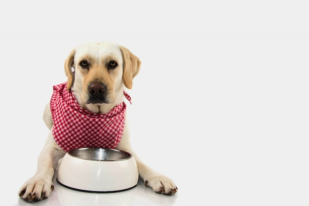 Hungry puppy with empty bowl and checkered bandana.