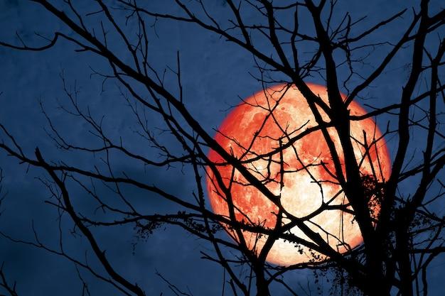 Hunter's moon unosi się na niebie w cieniu wysuszonych gałęzi i liści w lesie