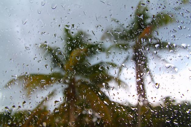 Huraganowi tropikalni burza drzewka palmowe z wewnątrz samochodu
