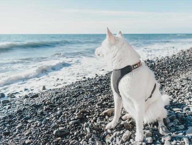 Husky pies siedzi na wybrzeżu