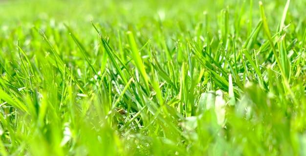 Idealne zielone tło przy świeżej trawie