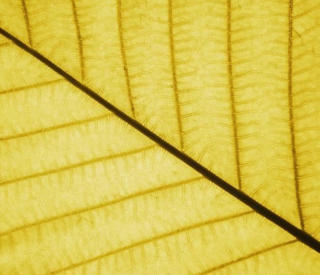 Idealne złote wzory liści - zbliżenie