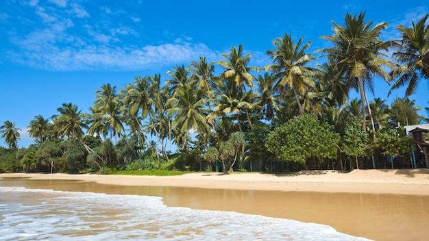 Idylliczna plaża. sri lanka