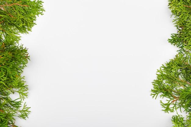 Iglaste zielone gałęzie na białej przestrzeni. widok z góry. miejsce do pisania. przestrzeń bożego narodzenia.