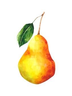 Ilustracja akwarela dojrzałe gruszki czerwone i żółte owoce clipart na białym tle