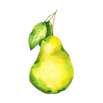 Ilustracja akwarela dojrzałe gruszki zielone i żółte owoce clipart na białym tle