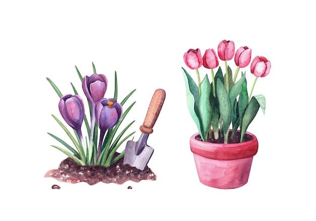 Ilustracja do ogrodu. akwarela fioletowe wiosenne kwiaty krokusy w ziemi i łopata, sikora i tulipany w doniczce na białym tle
