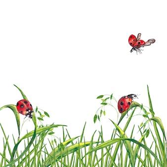 Ilustracja realistycznego lata świeża zielona trawa z spikelets i biedronkami. malarstwo akwarelowe.