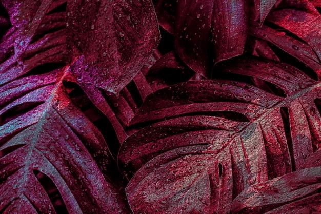 Ilustracja tła ciemnoczerwonego liścia monstera