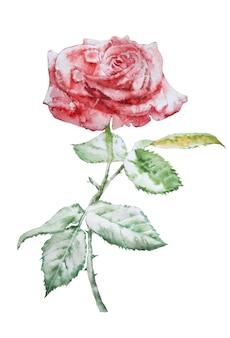 Ilustracja z czerwoną różą