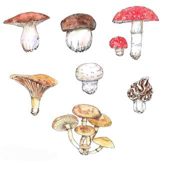 Ilustracje grzybów akwarela i atrament. ręcznie rysowane różne dzikie grzyby leśne na białym tle na białym tle