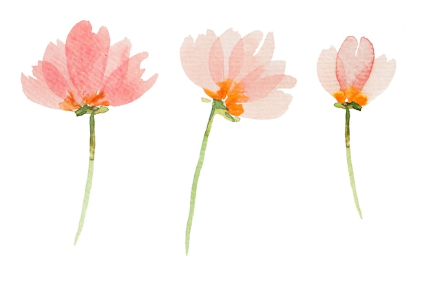 Ilustracje kwiaty akwarela rpink na białym tle