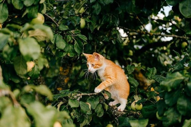 Imbirowy kotek na drzewie