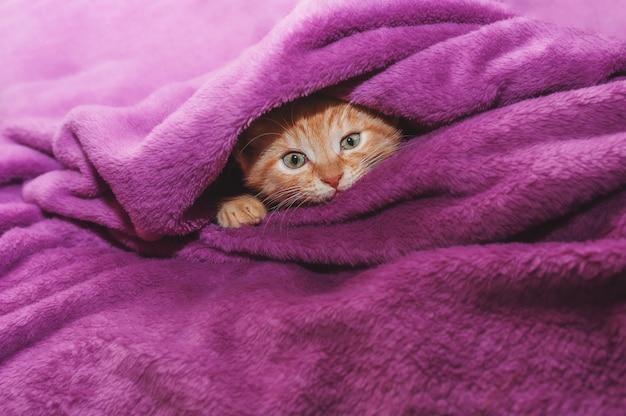 Imbirowy kotek przytula miękką zabawkę