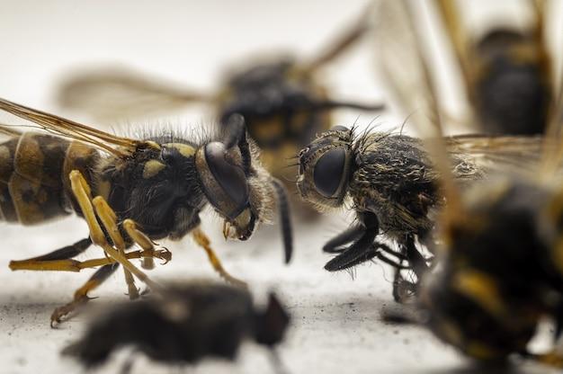 Imponujące zdjęcie makro pszczół